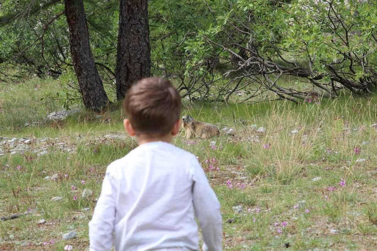 A la découverte des Marmottes